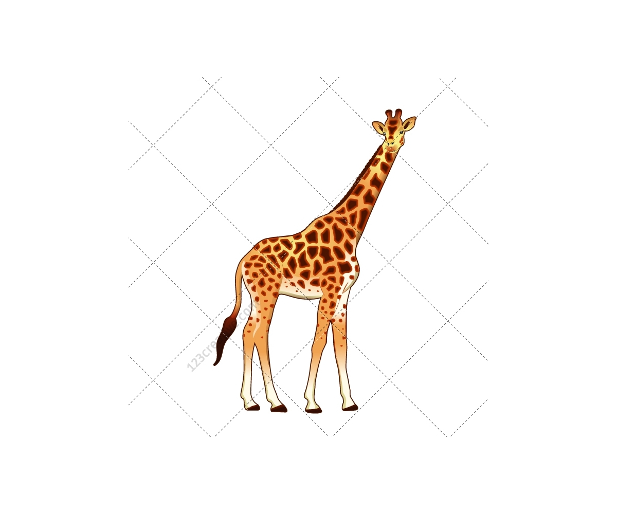 safari illustration - exotic animal vector