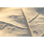 light texture, leaf textures pack, leafs, structure, white background, winter, soft texture, buy, download
