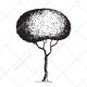 sketch tree vector pack, drawing tree vectors, sketch maple vector