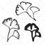 sketch leaf vector pack, ginkgo vector