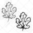 canadian leaf vector, maple vector, sketch leaf vector