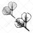 alder leaf vector, drawing leaf vectors