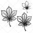 chestnut leaf vector, sketch leaf vector art