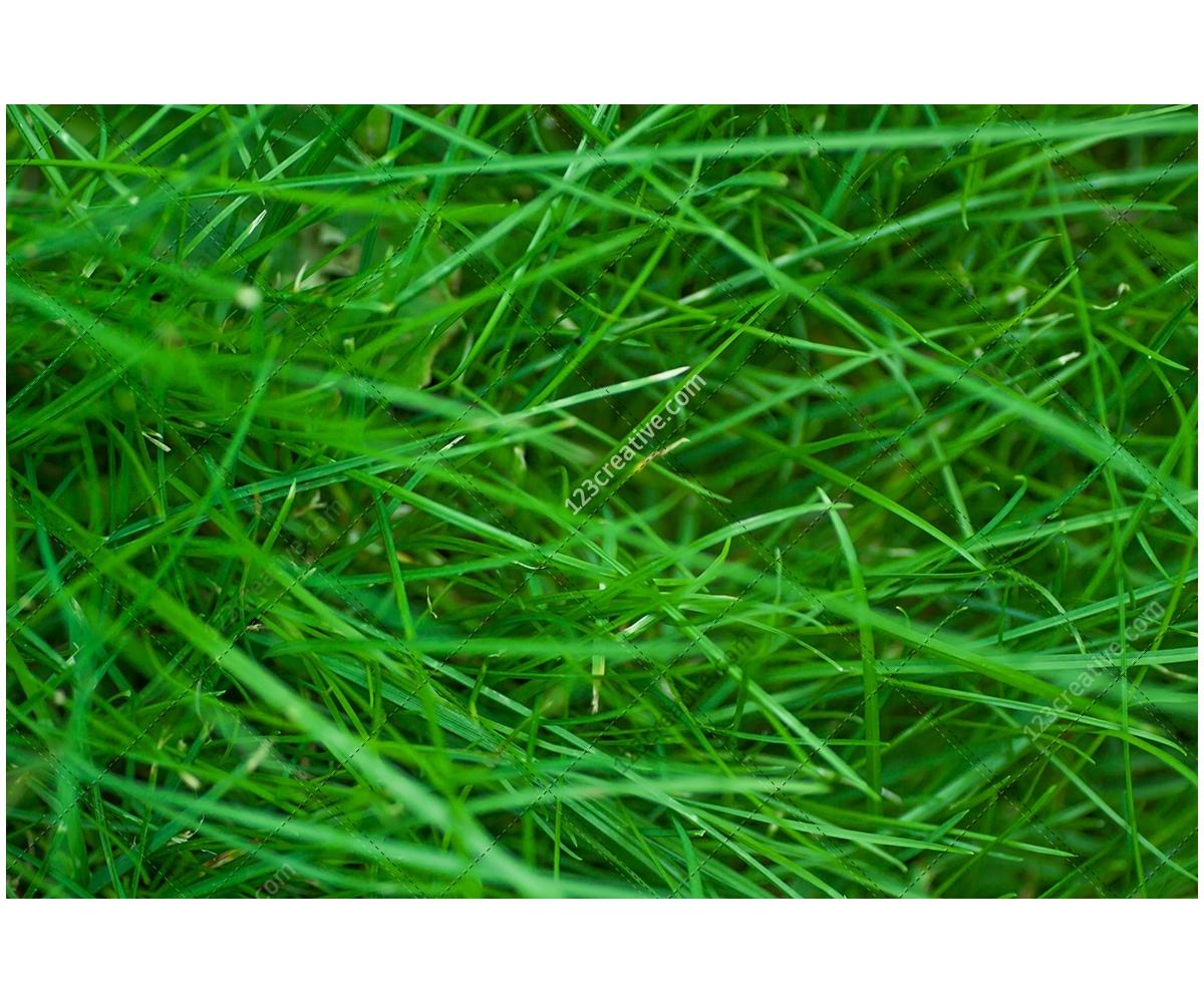 Natural Textures Pack Various High Resolution Nature