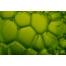 green bubbles, soap bubble textures, soap bubbles backgrounds, green abstract texture, graphic design texture buy