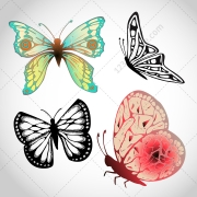 butterfly vector pack, butterflies vector art, butterfly silhouette, buy vectors