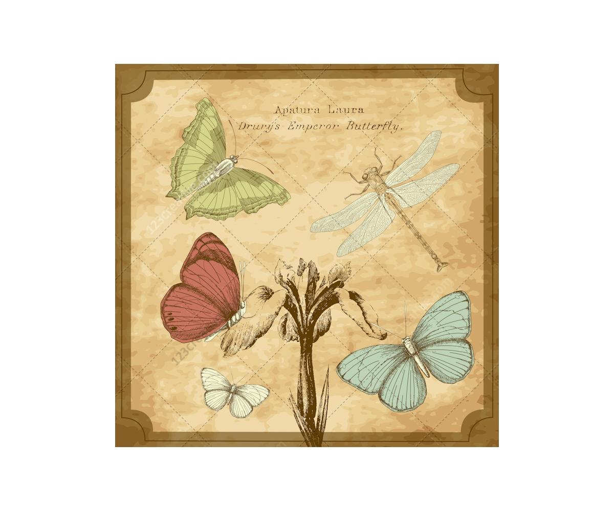 vintage butterfly vector illustrations