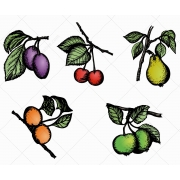 Sketch Fruit vector pack, sketch fruits vectors