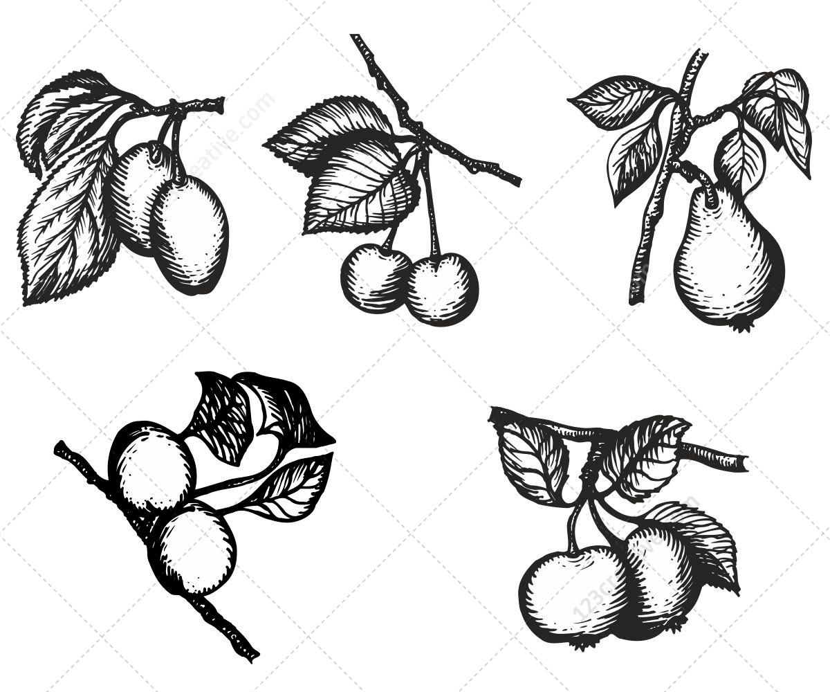 Various Hand Drawn Fruits