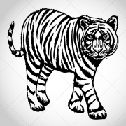 Sketch Tiger vectors