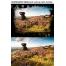 film border texture background effect