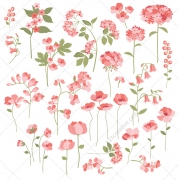 summer flowers vectors, flower vector art, wild flower vector, pink flower vector