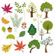 flat trees and leaves vector pack, deciduous tree vectors, conifer vectors,