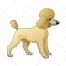 Poodle dog vector