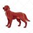 Irish Setter dog vector