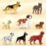 realistic dog vector illustration, dog vector art